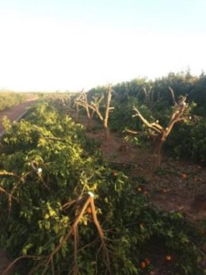 eliminadas 40000 plantas ilegales
