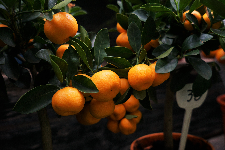 mandarinas-orri-valencia